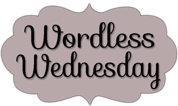 wordlesswednesday