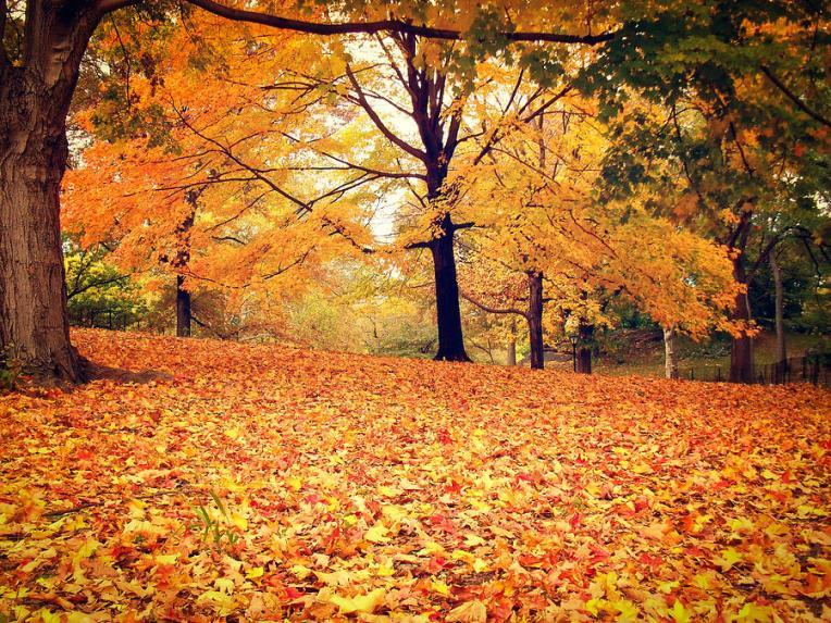 autumn-leaves-central-park-new-york-city-vivienne-gucwa