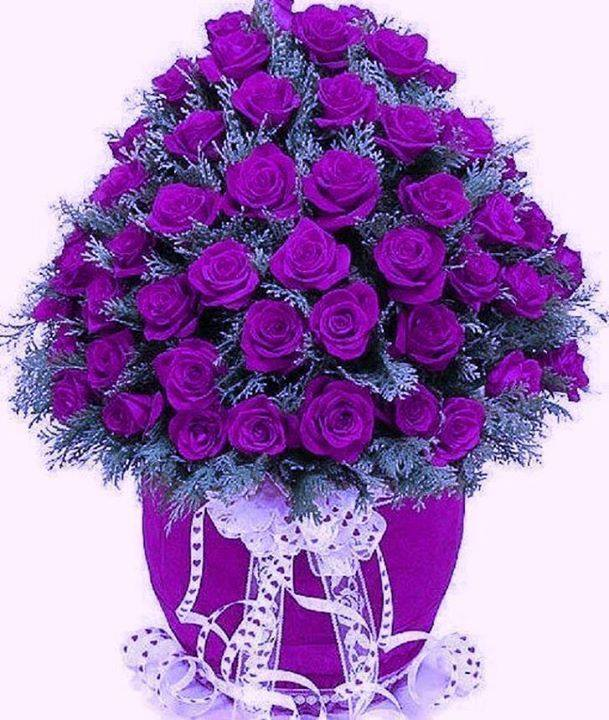 bunch purple rose