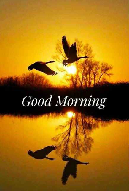 Good Morning Images For Whatsapp __ Beautiful Good Morning Images For Whatsapp __ Good Morning Shayari